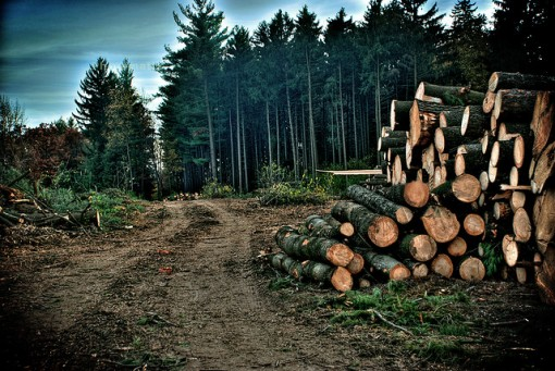 deforestation_facts_trees-e1431235603944